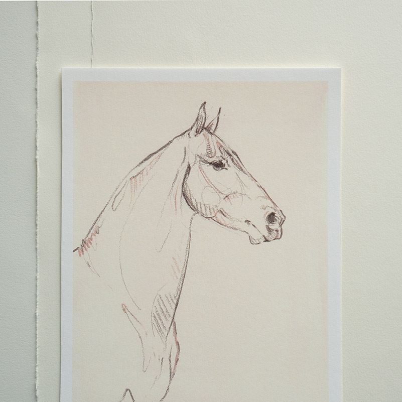 drawing of a horse by danielle demers